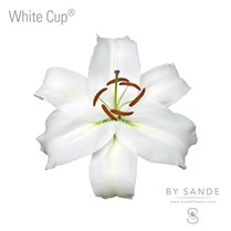 White Cup®