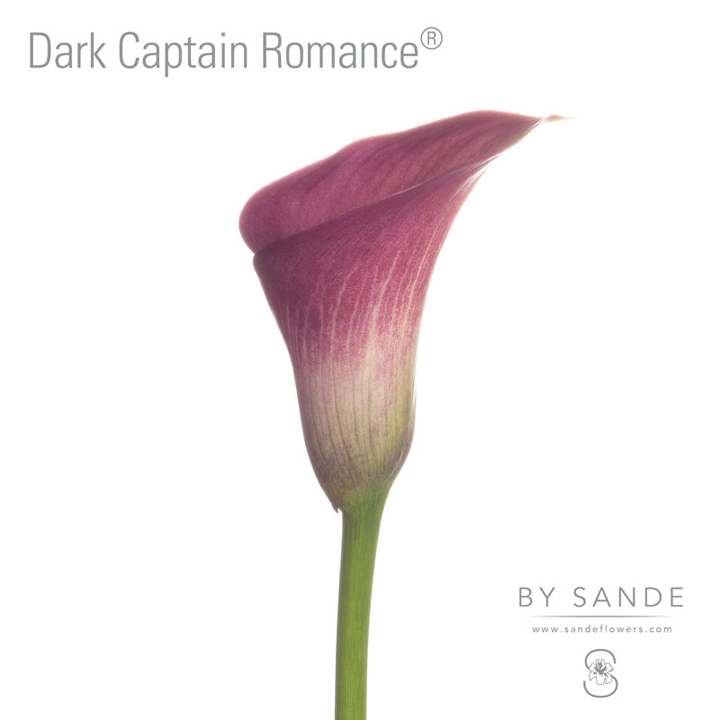 Dark Captain Romance®