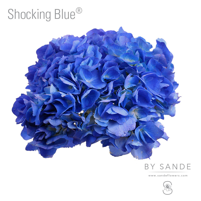 Shocking Blue®