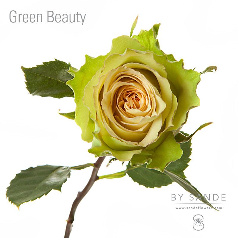Green Beauty Sande Flowers