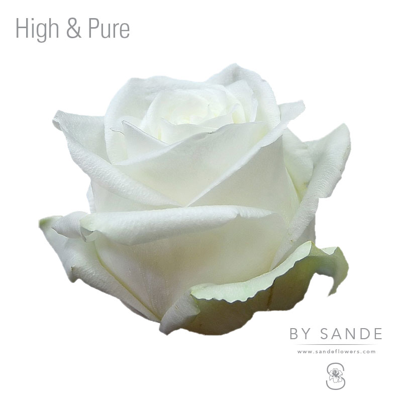 Buy Here Pay Here Miami >> High & Pure - Sande Flowers