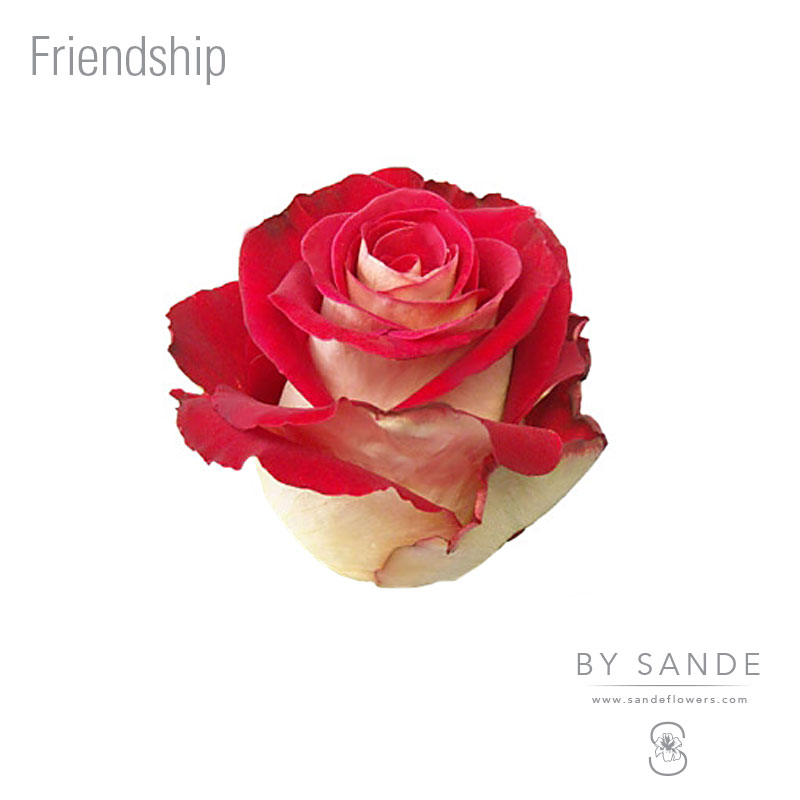 Buy Here Pay Here Miami >> Friendship - Sande Flowers