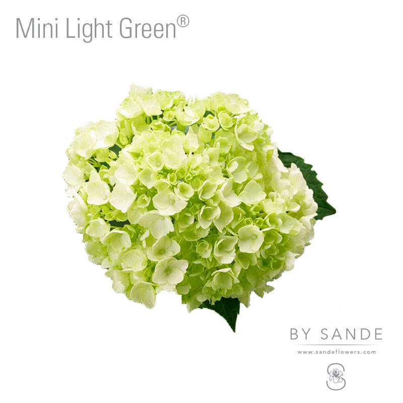 Mini Light Green®