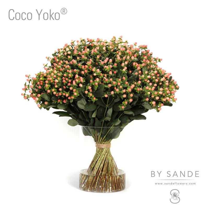 Buy Here Pay Here Miami >> Coco Yoko® - Sande Flowers