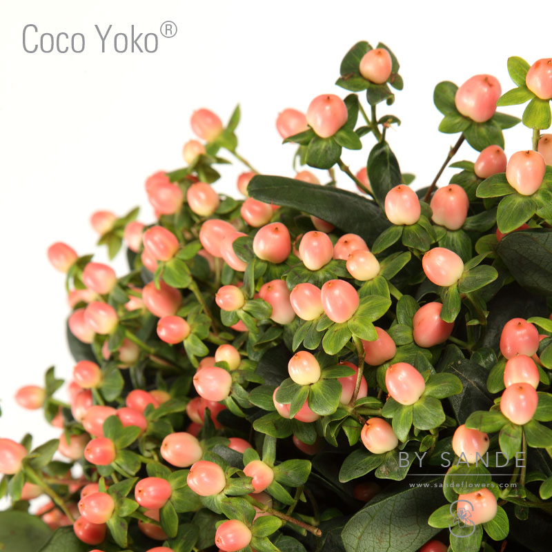 Buy Here Pay Here Miami >> Coco Yoko® - Sande Flowers