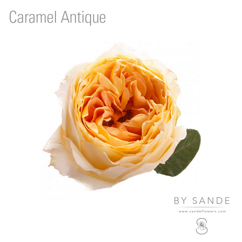 Buy Here Pay Here Miami >> Caramel Antique - Sande Flowers
