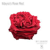 Mayra's Rose Red