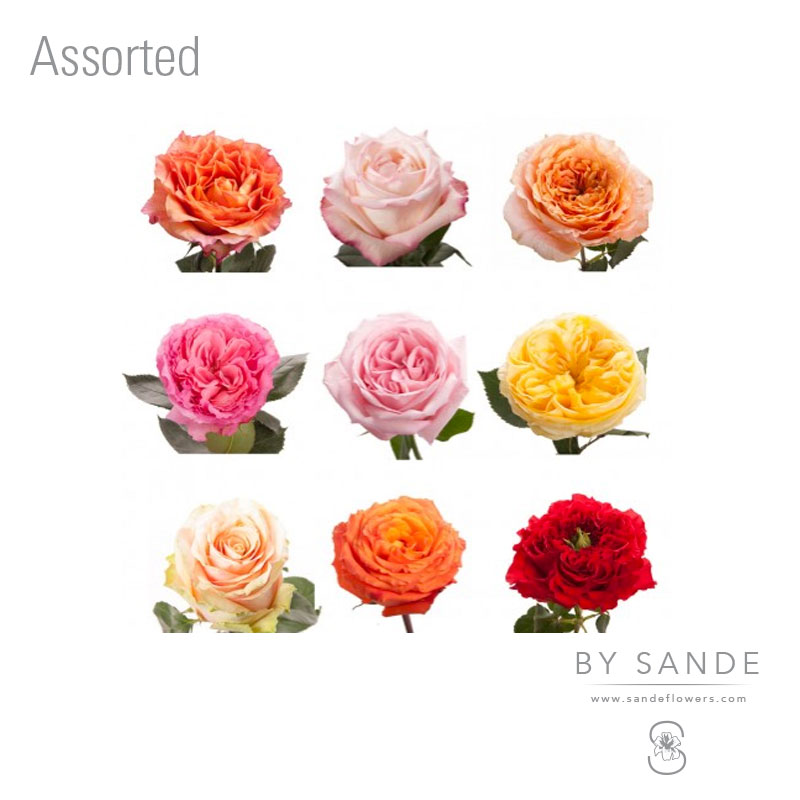 Buy Here Pay Here Miami >> Assorted - Sande Flowers