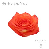High & Orange Magic