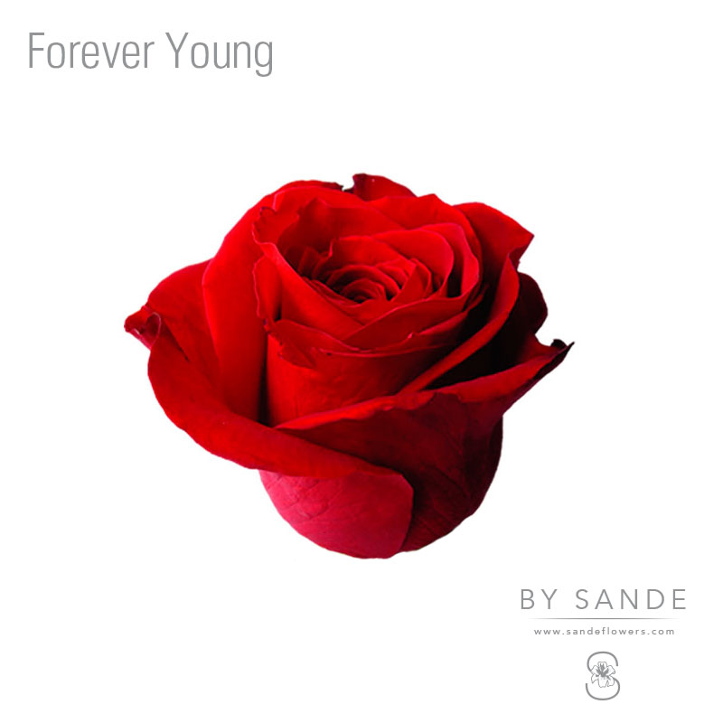 Buy Here Pay Here Miami >> Forever Young - Sande Flowers