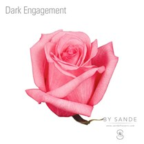 Dark Engagement