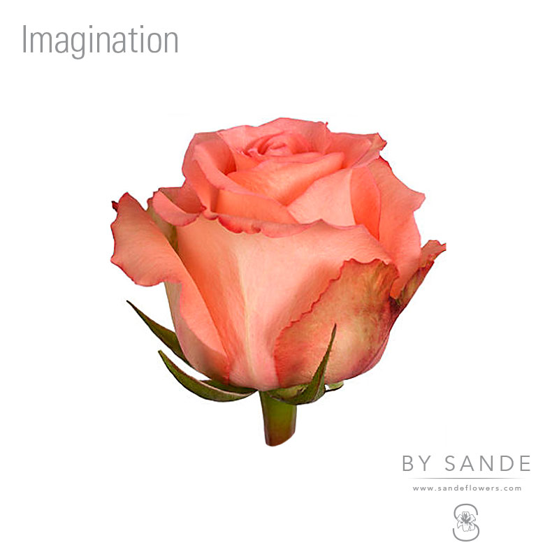 Buy Here Pay Here Miami >> Imagination - Sande Flowers