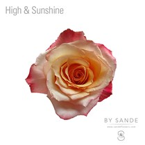 High & Sunshine