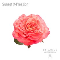 Sunset X-Pression