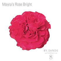 Mayra's Rose Bright