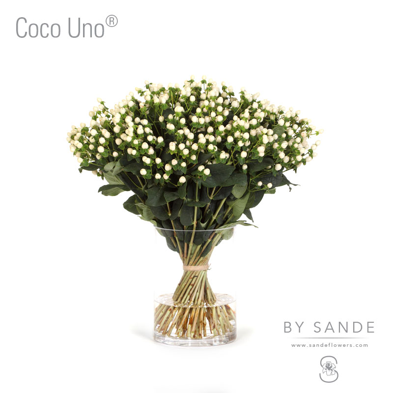 Buy Here Pay Here Miami >> Coco Uno® - Sande Flowers