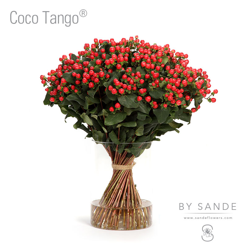Buy Here Pay Here Miami >> Coco Tango® - Sande Flowers