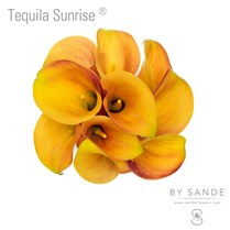 Tequila Sunrise®