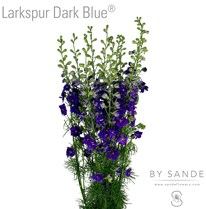 Larkspur Dark Blue