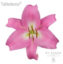 Tabledance®