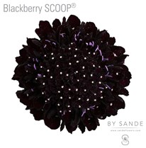 Blackberry SCOOP