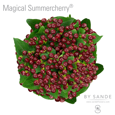 Magical Summercherry