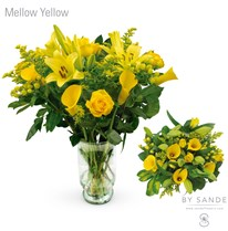 BQT Mellow Yellow