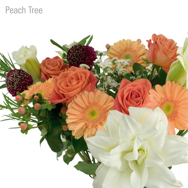 BQT Peach Tree