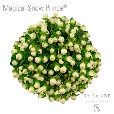 Magical Snow Prince